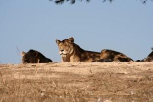 sigean-reserva-zoologica-provenza