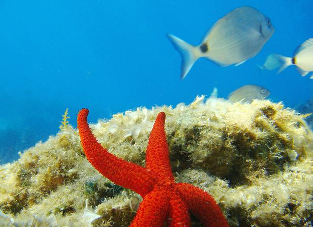 esnorquel-snorkel-mediterraneo