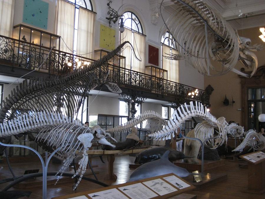 monaco-museo-oceanografico-costa-azul