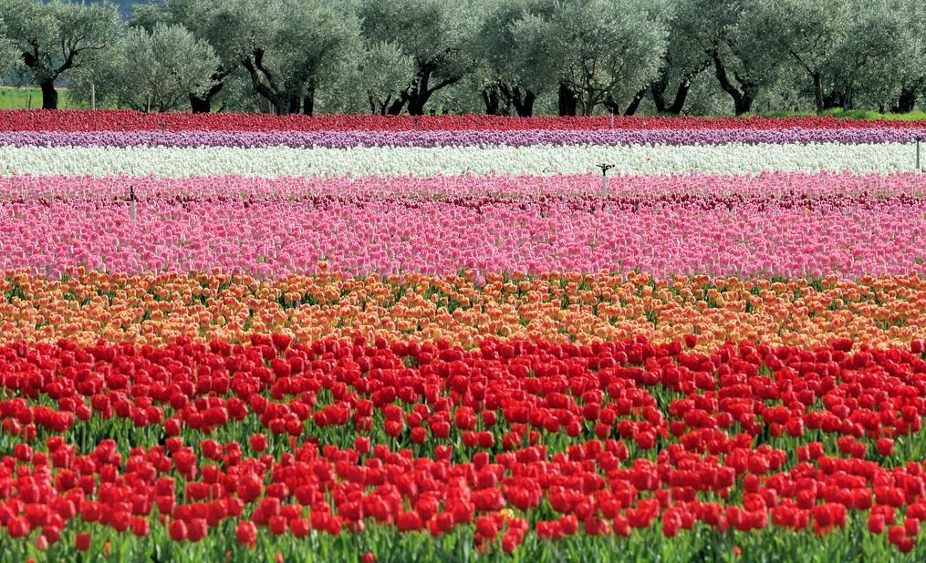 Primavera en la Provenza con aroma de Holanda